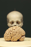 A Human Brain on a Platter in Front of a Human Skeleton Model