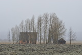 Snow Falling at the John Moulton Homestead and a Barn Behind a Stand of Trees