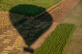 The Shadow of a Hot Air Balloon Above Fields in the Nile Valley Near Luxor