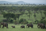 Elephants in a Plain Surrounded by Mountains in Serengeti National Park