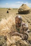 A Farmer Stacks Wheat in Ethiopia