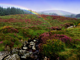 Rainbow and Heather in County Wicklow  Ireland