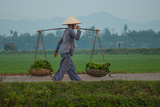 Carrying Vegetables to Market around Phong Triu in the Danang Area of Vietnam