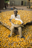 A Farmer Drying Corn
