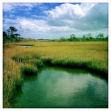 A Chesapeake Bay Marsh