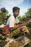 A Woman Harvests Peanuts on a Farm