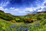 Bluebells in the Glens of Antrim  Northern Ireland