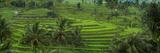 The Jatiluwih Rice Terraces