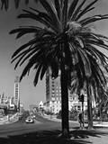 View of Wilshire Boulevard  Los Angeles