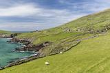 Sheep Fences and Rock Walls Along the Dingle Peninsula