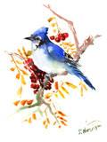 Blue Jay 12