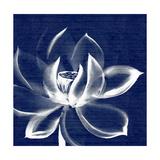 Lotus Shibori