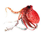 Octopus Deep Red