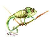 Chameleon Reproduction d'art par Suren Nersisyan
