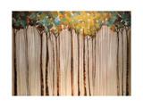Light in the Leaves Reproduction d'art par Kari Taylor