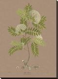Vintage Botanicals I
