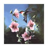 Ruby Throated Hummingbird
