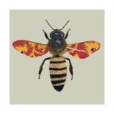 Honey Bee  2010