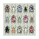 Beetledrive  2008