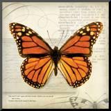 Butterflies Script II