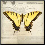 Butterflies Script V