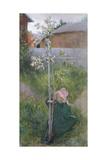Apple Blossom (Appelblom)  1894