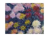 Chrysanthemums  1897