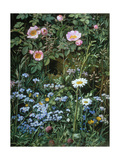 Wild Roses  Forget-Me-Nots and Daisies
