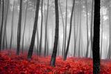 Forêt d'automne Papier Photo par PhotoINC
