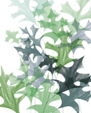 Leaf Impression II