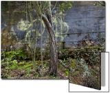 Tree and Graffiti Wall (Oakland  CA)