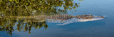 Crocodile - Everglades National Park - Unesco World Heritage Site - Florida - USA Papier Photo par Philippe Hugonnard