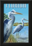 Blue Herons in Grass - Florida