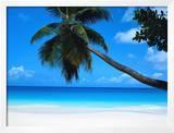 Beach and Palm  Seychelles Island