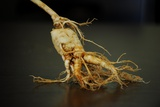 Ginseng Is Any One of Eleven Species of Slow-Growing Perennial Plants with Fleshy Roots