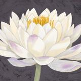 Moon Lily II
