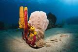 Variety of Sponges