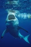 Great White Shark, Carcharodon Carcharias, Mexico, Pacific Ocean, Guadalupe Papier Photo par Reinhard Dirscherl