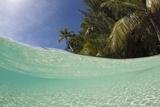 Lagoon and Palm-Lined Beach  Micronesia  Palau