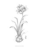 Botanical Sketch II