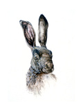 Study of a Hare  1502