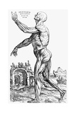 The Second Plate of the Muscles  from Book II of De Humani Corporis Fabrica  1543