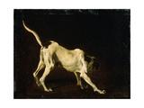 A Dog  17th Century
