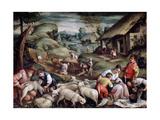 Summer Sheep Shearing  C1570-C1580