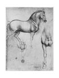 Studies of Horses, C1490 Giclée par Leonardo Da Vinci