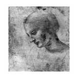Study of the Head of the Madonna  15th Century