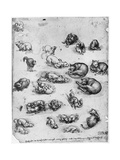 Studies of Cats  1513-1515