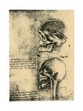 Anatomical Sketch; Two Studies of a Human Skull  C1489