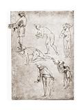 Adoration of the Shepherds  C1478-1480