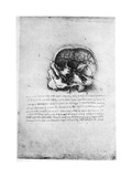 Study of a Human Skull  Late 15th or Early 16th Century